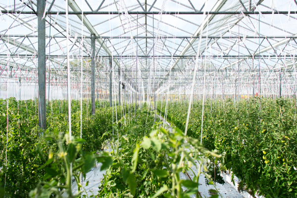 UK R&D CASE STUDY: THE AGRI-FOOD SECTOR